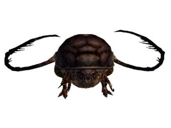 Tonique de jus de scarabée