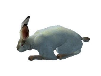 Tonique de lapin éternel